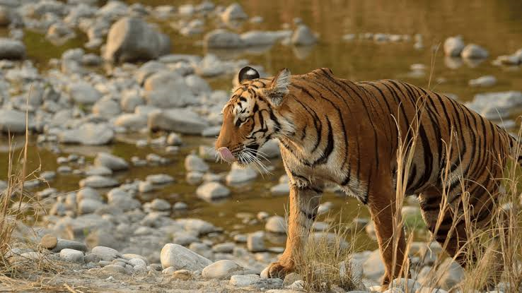 How can working parents spend a memorable time along with their kids in Jim Corbett?